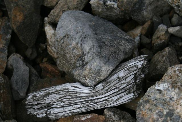 00 - Cover - Wood bent around rock