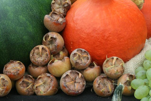09 - September - Meddlars and squashes