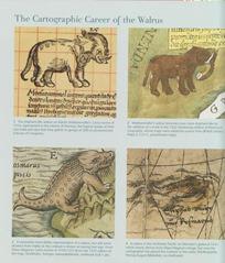 walruses_1